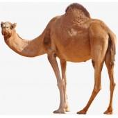 Пряжа верблюжья